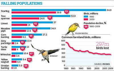 Bird population infographic