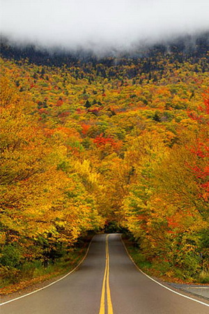 Tree Tunnel Fall Colors