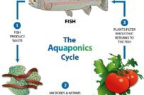 Aquaponic Gardening is a Must Try!
