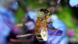 bee sensor to study CCD