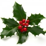 holly for an eco friendly christmas