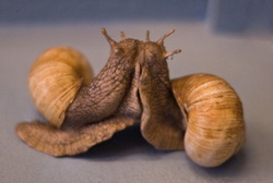 snails, slugs in garden can eat your plants