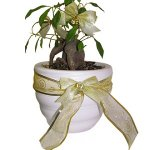 Eco Friendly Christmas Gifts for Adults tree